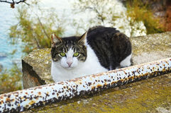 Cat with big green eyes stock image