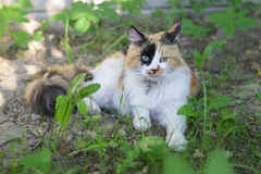 Cat. With the big green eyes sitting on the grass Royalty Free Stock Photography