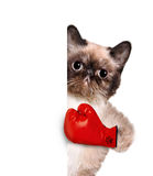 Cat with big red gloves Royalty Free Stock Photos