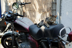 Cat on a bike Stock Photography