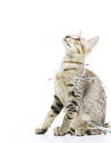 A cat bind wire lights for christmas Royalty Free Stock Image
