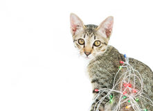 A cat bind wire lights for christmas Royalty Free Stock Photo