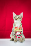 A cat bind wire santa claus for christmas Royalty Free Stock Photography