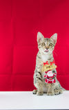 A cat bind wire santa claus for christmas Royalty Free Stock Photo