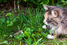 Cat and bird Stock Image