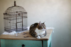 Cat and Bird Cage Stock Photos