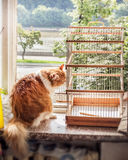 Cat with bird cage Royalty Free Stock Images