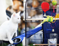 Cat about bird in cage. White little cat about bird in cage Stock Image