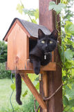 Cat in a bird feeder. Black cat holed up in a bird feeder Royalty Free Stock Photos