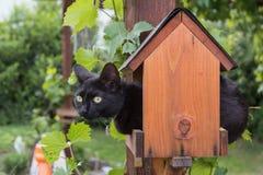 Cat in a bird feeder. Black cat holed up in a bird feeder Stock Photo