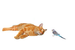 Cat and Bird: Friends or Foes Royalty Free Stock Images