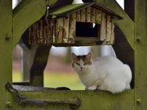 Cat and Bird House Stock Image