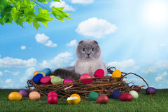 Cat in a bird's nest on the green grass Stock Photo