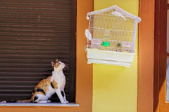 Cat and bird Stock Photography
