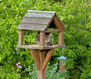 Cat on bird table Royalty Free Stock Image