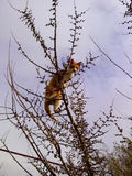 Cat or bird. Cat on the tree thinks it is a bird Royalty Free Stock Image