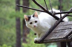 Cat on a birdhouse Royalty Free Stock Photography