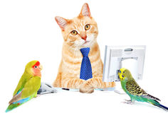 Cat and birds. Royalty Free Stock Image