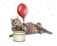 Cat With Birthday Cake and Balloon Stock Image