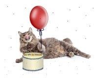Cat With Birthday Cake och ballong Fotografering för Bildbyråer