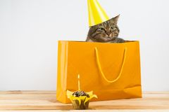 Cat in birthday hat blows out the candles on the cake. isolated on white background stock photography