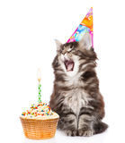 Cat in birthday hat blows out the candles on the cake. isolated on white. Background stock photos