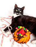 Cat birthday party Royalty Free Stock Image