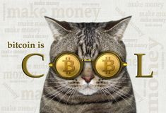 Cat in bitcoin glasses 3. The cat is in bitcoin glasses. There is the inscription ` bitcoin is cool stock photos