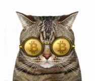Cat in bitcoin glasses. The cat is in bitcoin glasses. White background royalty free stock photos