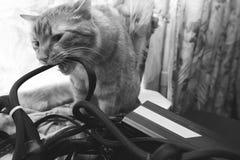 Cat Bite les fils photographie stock libre de droits