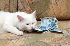 Cat bite money Stock Image