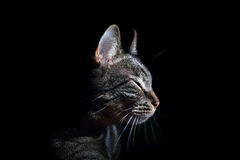 Cat on black Royalty Free Stock Photo