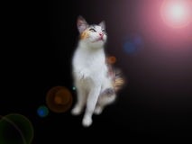 Cat with black background stock image