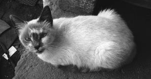 Cat, Black, Black And White, Whiskers stock images