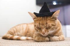 Cat with black cap Stock Photo