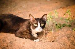 Cat. Black cat with catnip Royalty Free Stock Photo