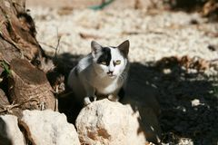 Cat with black eye patch. White cat with black eye patch sitting on a stone royalty free stock photography