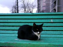 Cat. Black cat on green bench Royalty Free Stock Image