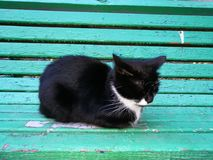 Cat. Black cat on green bench Royalty Free Stock Photo