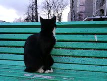 Cat. Black cat on green bench Stock Image