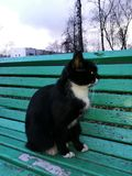 Cat. Black cat on green bench Royalty Free Stock Photography