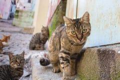 Cat. black grey cat, rear daplanda cats. Cat. black grey cat, rear daplanda cats royalty free stock photography