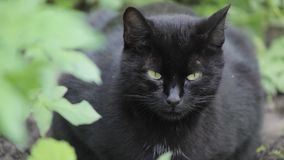 Cat black nature leaves background sun plant stems summer spring wind leaves bush stock video footage