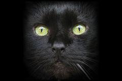 Cat black old mouth closeup eye Stock Images