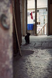 A cat. Black cat in old Tbilisi yard Royalty Free Stock Image