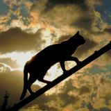 Cat black silhouette Royalty Free Stock Images