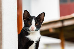 Cat black Stock Photos