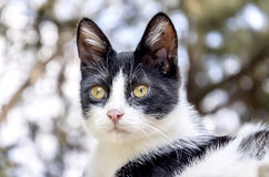 Cat. A Black And White Cat Stock Photo