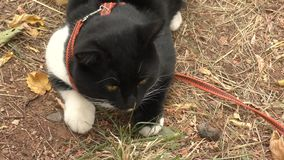 Cat black and white color stock video footage