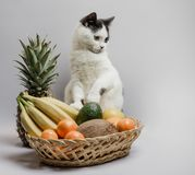 Cat with black and white fur next to a fruit basket stock photography